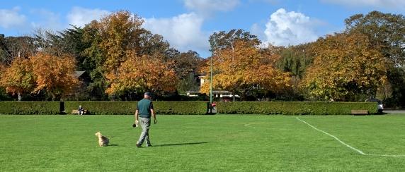 Windsor park field