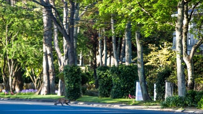 Trees in Community of Oak Bay